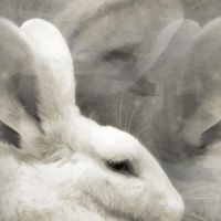 white rabbit by Jasmina-S