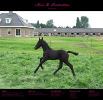 Horse Stock 005 - Friesian by MiszD