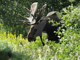 Photography: Kingly Grazer by JacquelineChroma