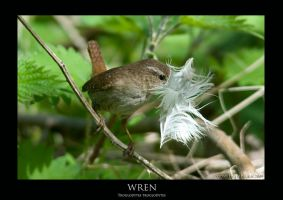 WREN.2 by THEDOC4