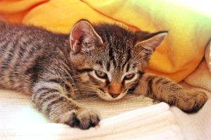 Sleeping Kitty by iBeci