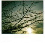 Signs of Winter by toy-camera