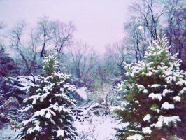 trees after snow by Elizabeth1315