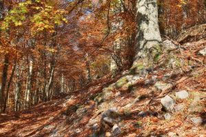 Foliage 1 - HDR by yoctox