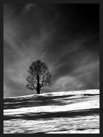 Winter landscapes by mutrus