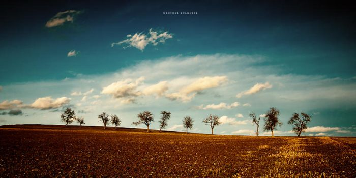 The Eleven Trees II by DREAMCA7CHER