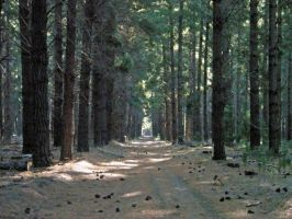 Forest Path Stock by DigitalissSTOCK