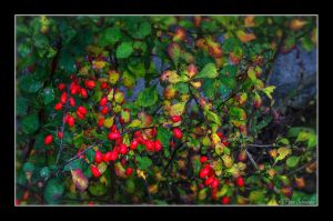 Fall crups. by Phototubby