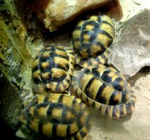 Turtle's by 3way