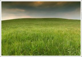 The grass is green by mjagiellicz