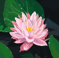 Water lily study by Asari-rus