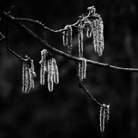 Icicles by NNarcissus