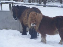 Snow ponies by Mayolijntje