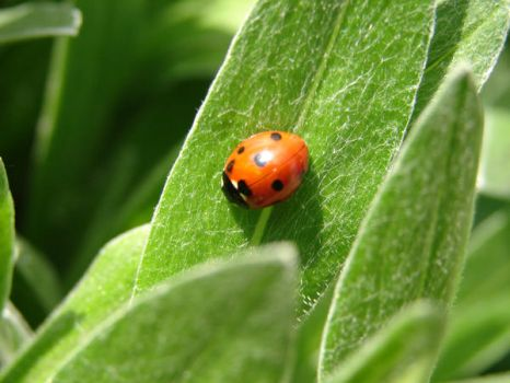 Ladybird by janniceblaze-photos