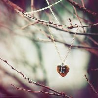 A Heart of Gold. by C4M30