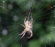 Along Came a Spider by Shibumi-Paul