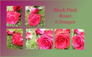 Stock Pack - Red Rose Tears by Gracies-Stock
