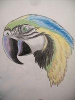 Macaw by Paine-Moon