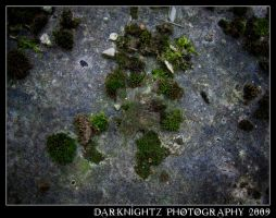 Moss by DarkNightZ24