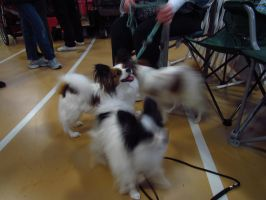 Pet Expo 1 by assassin4