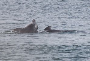 Dolphins by ryesher