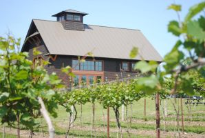 Winery amid the vines by morbiusx33