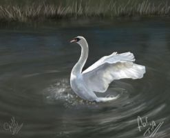 swan for tia by cliffbuck