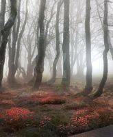 Magic forest- stock by Aeternum-designs