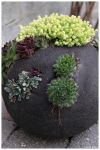 Globe of succulents by paper-love