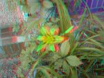 Lilium [Anaglyph 3D] by Foxtronic