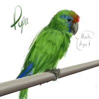 Pupa the Parrot by omtay