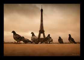 Eiffel Bird by densss