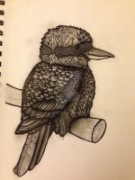 Work in progress III Kookaburra III by dustingire