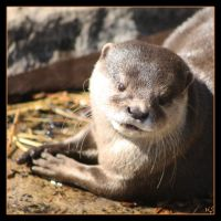 Otter 3 by Globaludodesign