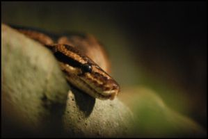 snake by morho