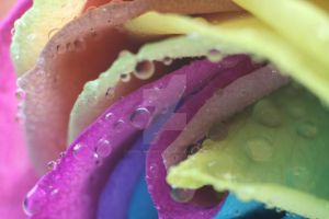 Colourful by Gothic-Enchantress