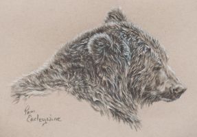 July 1 bear sketch by Earleywine