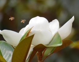 Honey Bee Attack 5-28-12 by Tailgun2009