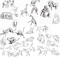 Animal Gestures by x-EBee-x