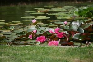 view to waterlilies 3 by ingeline-art