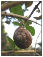 gastropod 1 by d-evans