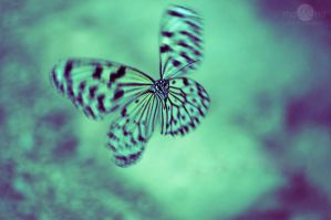 Spectral Butterfly by mqRina