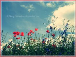 I like the poppies. by ShinyDandelion