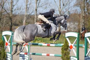 Grey Horse - Show Jumping Stock 8.6 by MagicLecktra