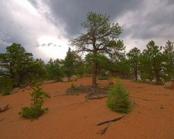 Lone Pine by greenunderground