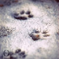 Kittens Paw Prints by hakukamizaki
