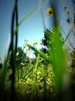 Weedy Perspective by Mechpics