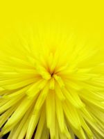yellosion by ENZZOK