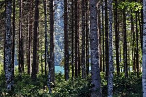 Lightflooted forest by UdoChristmann