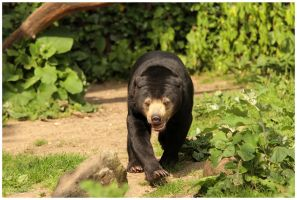 bear with hunger by Claudia008